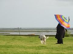 Spectre des couleurs: violet, indigo, bleu, vert, jaune, orange, rouge (marycesyl,) Tags: pluie parapluie couleurs arcenciel