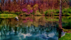 Why we live in the Ozarks (boriches) Tags: heron pond spring