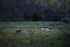 Deer at SMP (Christopher_Mills) Tags: springtime deer shawneemissionpark kansas