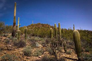 Full Moon - Saguaro Cactus landscape