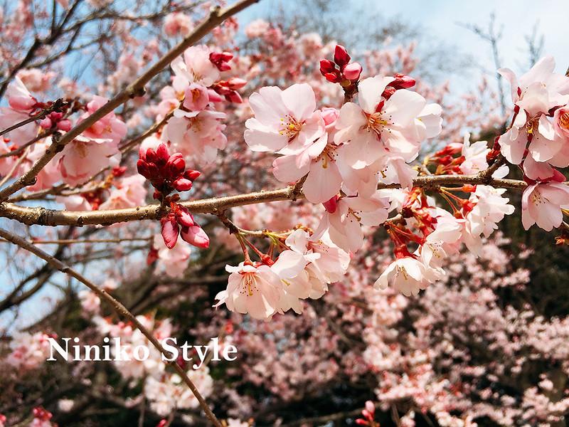 自助,海外,婚紗,日本,東京,櫻花