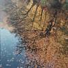 scan0008 (sertacsalman) Tags: mamiya mamiyac220 nature bolu yedigöller 120mm mediumformat kodak portra portra400