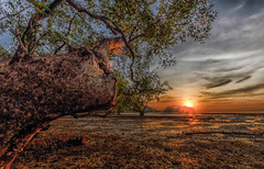 Sunrise at the mud flats (Stan Smucker) Tags: trees sunset mudflats mangrove lowtide