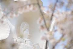 20170415-DS7_5280.jpg (d3_plus) Tags: bokeh 寺 歴史的建造物 aiafzoomnikkor80200mmf28sed d700 hiking 80200mmf28d 風景 日常 walking telephoto 晴れ tele zoomlense shrine daily 望遠 nikon 自然 空 景色 ancientcity history trekking 神奈川県 sky 寺院 temple 80200mm japan トレッキング ニコン 歴史 80200mmf28 dailyphoto ハイキング historicmonuments 80200mmf28af kanagawa flower buddhisttemple shintoshrine 8020028 thesedays nature 植物 fine 散歩 大船 nikond700 花 scenery ズーム 神社 nikkor 古都 80200 日本 bloom fineday ボケ plant