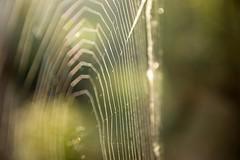 Spider's web , (jwzw@ymail.com) Tags: color nature light abstract bright design pattern texture art blur dawn drop vertical outdoors desktop
