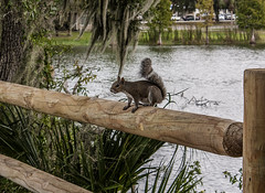 Park it (antaclifton) Tags: park wood baby lake cute green fall love nature water animal fence pond squirrel pretty florida tail warmth cutie prettty