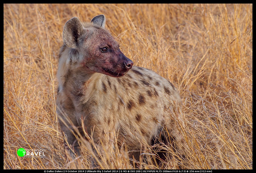 Bloody hyena!