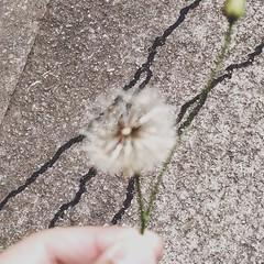 Faça um pedido. (rheehsantos) Tags: flower nature beautiful brasil natureza lindo lucky sorte makeawish