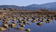 Parco Regionale della Maremma (Explore 2014-11-01  #413) (Jambo Jambo) Tags: italy panorama landscape italia swamp tuscany toscana palude grosseto maremma padule parcodellamaremma parcoregionaledellamaremma nikond5000 jambojambo salinizzazione