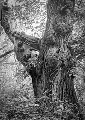 ancient places (Stewart485) Tags: england tree woodland places things worcestershire impression evocative ancientplaces worcestershirewildlifetrust vaguelyarty pipershilldodderhillcommons