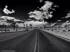Joshua Tree National Park (zoeblue_photography) Tags: california sky blackandwhite nature clouds landscape landscapes nationalpark desert joshuatree bnw olympusomdem1 rokinon75mmfisheyelens zoepamintuan zoebluephotography