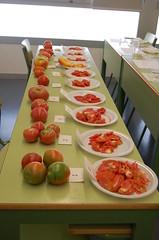 Degustación tomate ecológico puntdesabor 9