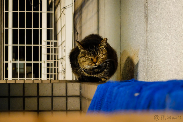 Today's Cat@2014-10-30