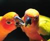 Parrots (a.rutherford1) Tags: city urban bird animal digital mammal zoo nikon singapore asia forsale reptile wildlife conservation tropical captivity singaporezoo d300 republicofsingapore modelnikond300 exposuretime1400sec photosfromflickrgmailcom fnumberf4 lens300300mmf4040 isospeedratings450
