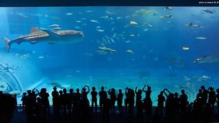 沖繩美海水族館 - 黑潮之海
