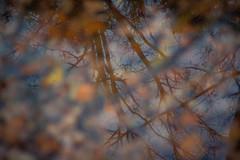 autumn waters (varya.polyanskaya) Tags: autumn reflection leaves waters