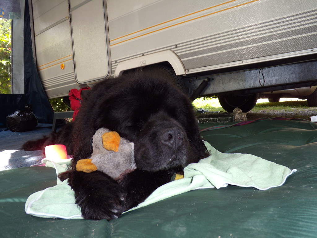 Me And My Duck Juwelenstudio Tags Dog Newfoundland Hond Newf Newfie Newfoundlander Newfy