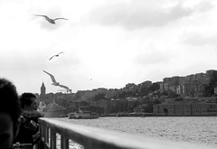 Pensamientos en el Bsforo (isagsr) Tags: summer bw byn ro canon turkey river seagull istanbul thoughts bosphorus estambul turqua bsforo canoneos550d
