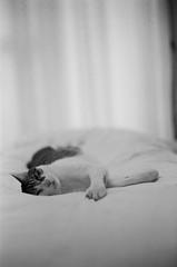 Leica_m_BW_5281_smile (OPTIK AXIS) Tags: camera leica blackandwhite film smile cat taiwan monochromatic 135   rf  leicacamera   blackandwhitefilm  summiluxm      analoguephotography  mp85 kentmere400   m garylevel