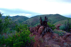 """Overlooking grassy hills and a twisted stump • <a style=""""font-size:0.8em;"""" href=""""http://www.flickr.com/photos/34843984@N07/15545105095/"""" target=""""_blank"""">View on Flickr</a>"""