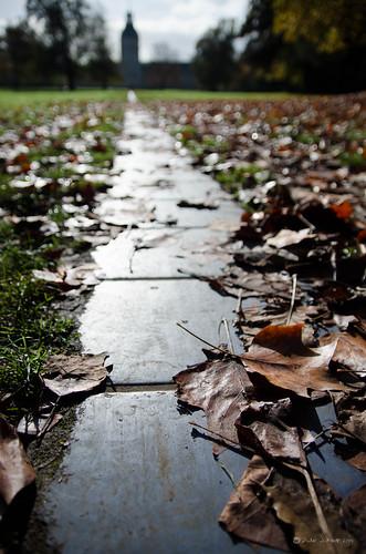Herbst im Schloßgarten