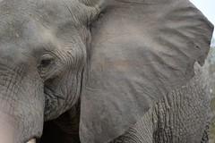 Kruger National Park (CharlGrobler) Tags: africa park game nature wildlife south national kruger
