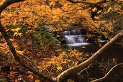 Colorful Falls (Joe Szalay) Tags: autumn trees orange fall leaves georgia waterfall fallcolors gibbsgardens gibbsgarden