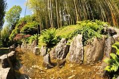 Il giardino Zen (illyphoto) Tags: italy italia villacarlotta lombardia bambu laghetto giardinozen tremezzo bamb cannedibambu illyphoto parcodivillacarlotta photoilariaprovenzi