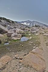 DSC_0082 (stardustycg) Tags: california raw hiking alpine yosemite wildflower highcountry vogelsang