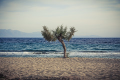 tree beach solitude alone isolated