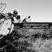 Missouri-Pacific Railway Trestle over Salt Bayou 1410251328bw
