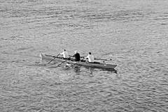 Rowing (thendele) Tags: river rowing rhine rhein rheinufer rheinlandpfalz rudern bingen ruderer mittelrhein bingenamrhein