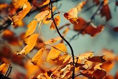image (Eva O'Brien) Tags: light shadow chicago fall nature leaves nikon october squirrel squirrels shadows ukrainianvillage urbannature d3100 nikond3100 evacares evaobrien
