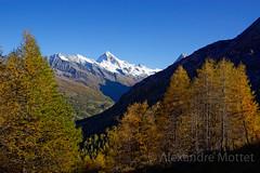 La Meina, Dent Blanche (Alexandre Mottet Photographie) Tags: autumn mountains alps switzerland larch dentblanche valais evolne valdhrens lameina
