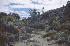 USA: Joshua Tree 1997 (patrikmloeff) Tags: world voyage california travel usa holiday nature rock analog america landscape nationalpark reisen holidays rocks unitedstates desert minolta earth path urlaub unitedstatesofamerica natur joshuatree steine american voyager analogue traveling monde amerika paysage landschaft ferien wste reise mojavedesert kalifornien welt pfad erde amerikanisch joshuatreenationalpark joshuatreenp vereinigtestaaten verreisen mojavewste
