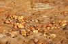 679 Dead Sea