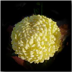 44W2014 La reine des fleurs novembre