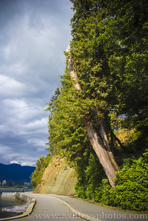 Stanley Park Trail