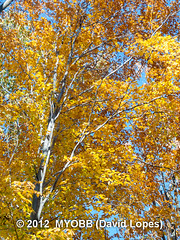 Scherman Wildlife -314762 (myobb (David Lopes)) Tags: color fall nature wildlife olympus leafs audubon e510 bernardsville newjerseyaudubonsociety theschermanhoffmanwildlifesanctuary