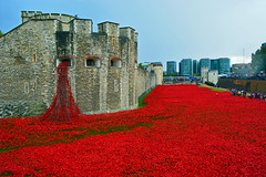 The Poppy field (Travis Pictures) Tags: city london castle photoshop nikon fort poppy poppies rememberance moat fortress toweroflondon towerhill cityoflondon d5200 toweroflondonpoppies