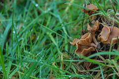 TBI Mushrooms (Cissa Rego) Tags: bridge autumn flower tree bird fall nature mushroom leaves animal landscape duck pond nikon seasons d70s fungi fungus