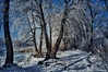 Hoarfrost on the Trees (smuta2006) Tags: winter river riverfront creek backwater dnieper dnipro riverbank bank beach island snow snowdrift snowfall white flake icebound ice floe frost frozen hoarfrost rime water nature natural beauty naturalbeauty tree trunk stem bole rind bark grove copse wood woods forest undergrowth plant rush reed cane duckweed bush shrub twig branch weed sky cloud shadow reflection cold coldness chill waterscape landscape scenery kyiv kiev ukraine europe affinityphoto hdr nondslr sony nex nex5r
