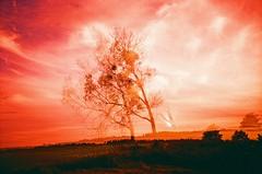Kuwasy (Marcin Kubiak) Tags: expiredfilm lca lomo velvia xpro poland 35mm analog abandoned believeinfilm doubleexposure dream filmphotography grain ghost lomography multiexposure nofilter nature biebrza outdoor surreal sky tree talesfromtheroad