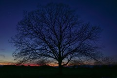 Tree. (BadGunman) Tags: stars star field lightning color dart nature france sunset night tree