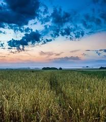 Чудный рассвет / Wonderful dawn (Павел Ныриков) Tags: рассвет поле солнце природа пейзаж