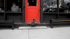 Guardian of the Red Door (Shu-Sin) Tags: brooklyn dog red door black wall glass people cafe coffee drink bench sidewalk new york city nyc