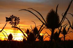 PASION POR EL CAMPO (kchocachorro) Tags: sun sunset campo nature landscape