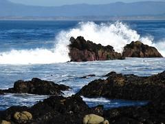 Pacific Grove, California (Jasperdo) Tags: pacificgrove california roadtrip pacificgrovemarinegardens montereypeninsula pacificocean landscape scenery waves rocks