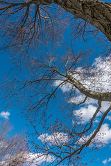 April Reach (johnjmurphyiii) Tags: 06416 clouds connecticut connecticutriver cromwell cromwelllanding originalarw park riverroad sky sonyrx100m5 spring usa johnjmurphyiii cloudsstormssunsetssunrises cloudscape weather nature cloud watching photography photographic photos day theme light dramatic outdoor color colour