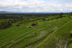 Overview (Bert#) Tags: indonesia bali jalituweh rice field overview nature paddy travel